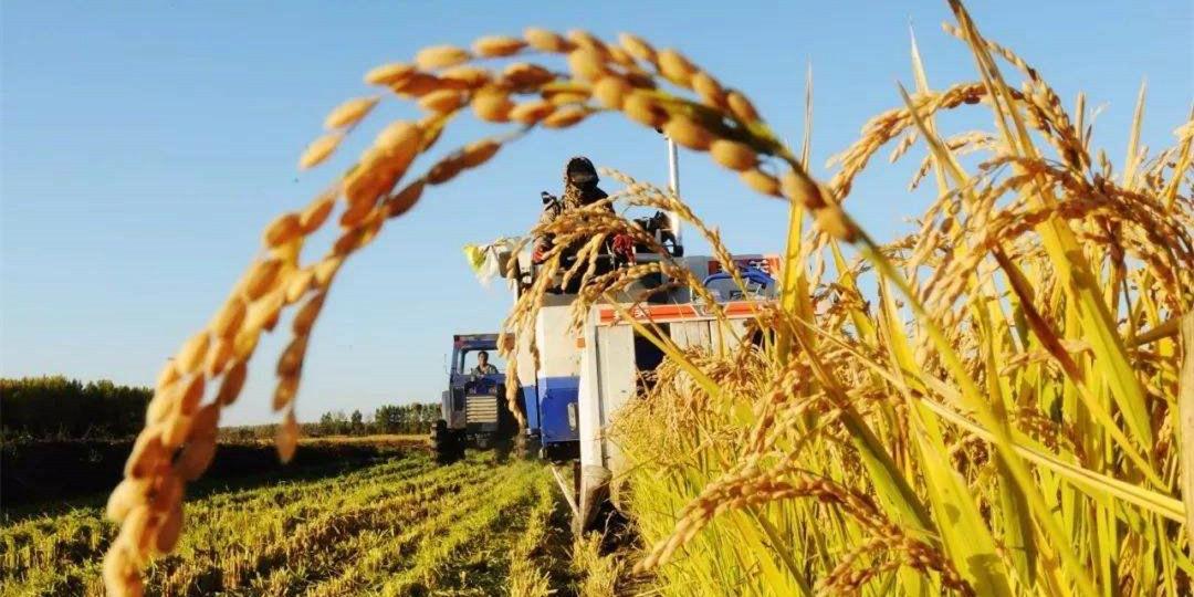 """专家两场重:""""十四五""""时期农业农村将出现七个重大结构性变化"""